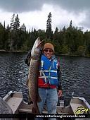 "41"" Northern Pike caught on Obakamiga Lake"