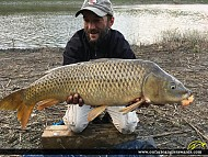 "34"" Carp caught on Nation River"