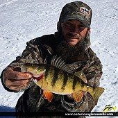 "12.5"" Yellow Perch caught on Ottawa River"