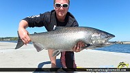 "37.00"" Chinook Salmon caught on Lake Ontario"