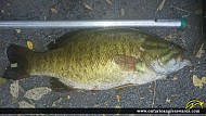 "21"" Largemouth Bass caught on Trent River"