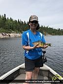 "12.5"" Yellow Perch caught on Winnipeg River"