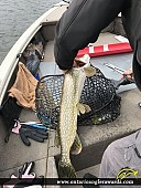 "36"" Northern Pike caught on Winnipeg River"