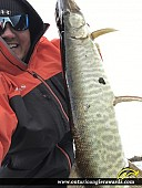 "37"" Muskie caught on Rideau River"