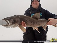 "31.00"" Lake Trout caught on Tyne Lake"