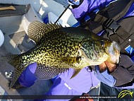 "14"" Black Crappie caught on Rice Lake"