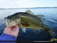 "18"" Largemouth Bass caught on Rice Lake"