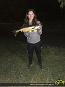 "25.4"" Walleye caught on Mississippi River"