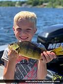"12.5"" Yellow Perch caught on Big Sand Lake"