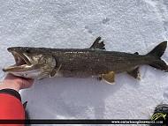 """30"""" Lake Trout caught on Lake Muskoka"""