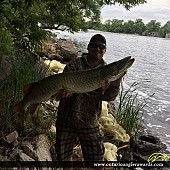 "43.5"" Muskie caught on Trent River"