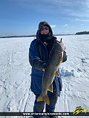 "34"" Lake Trout caught on Lake of the Woods"