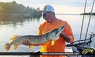 "44"" Northern Pike caught on Lake of the Woods"