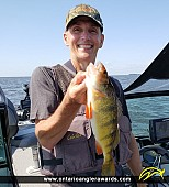"13.75"" Yellow Perch caught on Lake of the Woods"