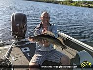 """28"""" Walleye caught on Louise Lake"""