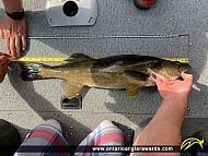"""28.5"""" Walleye caught on Granite Lake"""