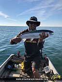 """26.5"""" Rainbow Trout caught on Lake Erie"""