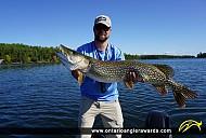 "42.5"" Northern Pike caught on Rainy Lake"