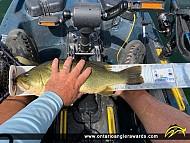 """18.75"""" Largemouth Bass caught on Big Rideau Lake"""