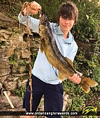 """25.9"""" Walleye caught on Grand River"""