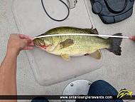 """20"""" Largemouth Bass caught on 3 Mile Lake"""