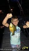 "11"" Bluegill caught on Mississippi Lake"
