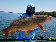 "35"" Carp caught on Lake Simcoe"