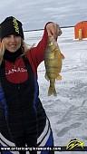 "13"" Yellow Perch caught on Lake Simcoe"