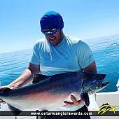 """40"""" Chinook Salmon caught on Lake Ontario"""