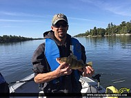 """13.0"""" Yellow Perch caught on Lake of the Woods"""