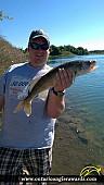 """26"""" Walleye caught on Moira Lake"""