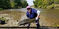 """38"""" Chinook Salmon caught on Credit River"""