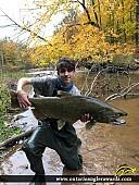 """41.25"""" Chinook Salmon caught on Bronte Creek"""
