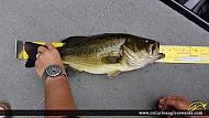 "21"" Largemouth Bass caught on Skootamata Lake"