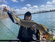 """33"""" Northern Pike caught on Waterford Pond"""