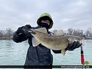 "28.5"" Walleye caught on Niagara River"