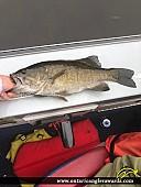 "19"" Smallmouth Bass caught on Ottawa river"