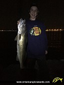 """26"""" Walleye caught on St. Clair River"""