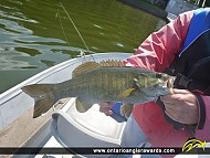 "17"" Smallmouth Bass caught on Rice Lake"