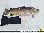"""26.5"""" Brown Trout caught on Lost Lake"""