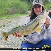 """32"""" Walleye caught on Larder Lake"""