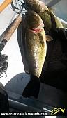 "23"" Largemouth Bass caught on Cold Lake"
