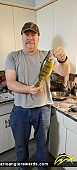 """13.5"""" Yellow Perch caught on Lake Erie"""