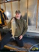 """23"""" Whitefish caught on Lake Simcoe"""