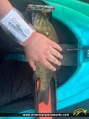 "18.5"" Smallmouth Bass caught on Golden Lake"