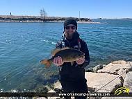 """18"""" Smallmouth Bass caught on Lake Ontario"""
