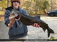 """34"""" Lake Trout caught on Lake Muskoka"""