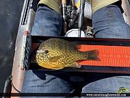 "9.25"" Pumpkinseed caught on Ottawa River"
