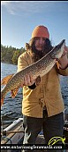 """36.75"""" Northern Pike caught on Iroquois Bay"""