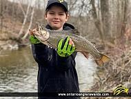 """21"""" Splake caught on Lake Huron"""